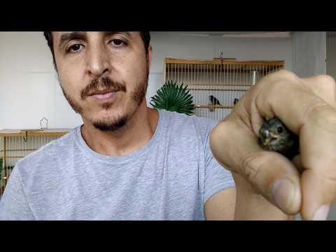 Como o fungo em pregos de mãos é chamado