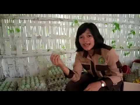 VIDEO PWMP STPP MAGELANG