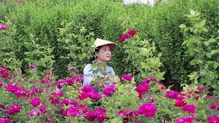It is the season when roses in Yunnan bloom. Ive picked some roses to make fresh flower cakes.