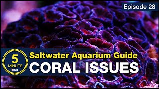 5 Minute Saltwater Aquarium Guide Episode #28 - Coral Health Issues