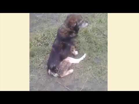 Собаку хотели усыпить! // Что сделал Elev8?! [Надежда Дручинина]