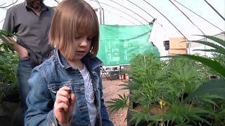 Marijuana-Based Drug Gets Positive FDA Review