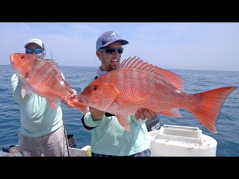 Kingfish, Cobia and Snappers - Offshore Fishing in Florida - 4K