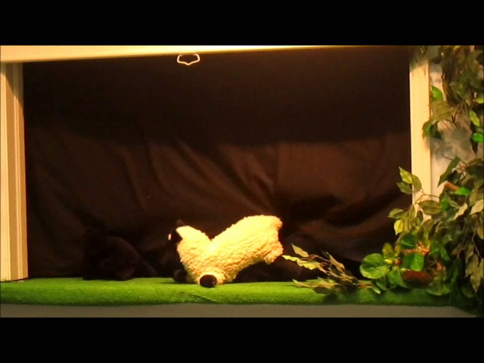 Puppet Show for kids - Kitten looking for his purr