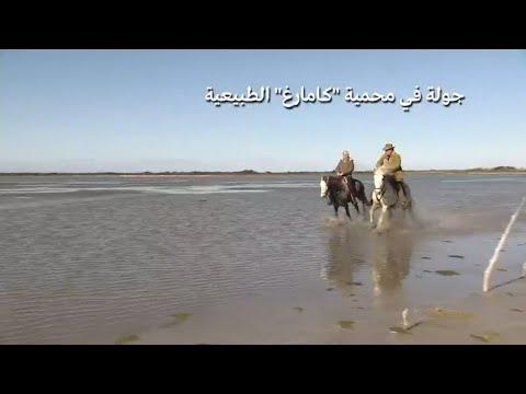العرب اليوم - شاهد: جولة في محمية كامارغ الطبيعية