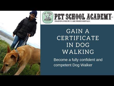 Pet School Dog Walking Course - Pet School Academy - YouTube