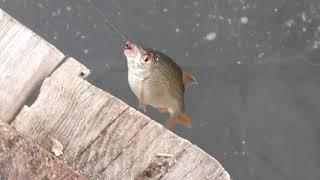 Рыбалка на харьковских водохранилищах и реках