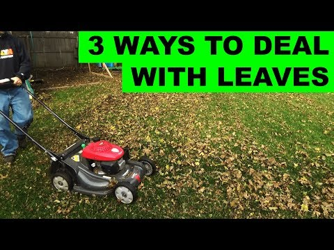3 ways to deal with leaves on your lawn