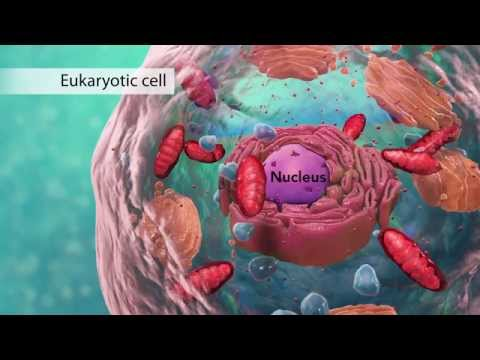 Biology: Cell Structure I Nucleus Medical Media