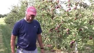 UMass Fruit Advisor - 09/02/08