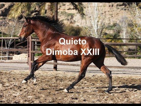 Quieto Dimoba - Dic 2019