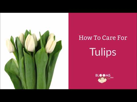 , title : 'How To Care For Tulips