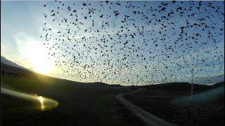 Volando con pájaros ????⎜⎟ FPV FREESTYLE ????