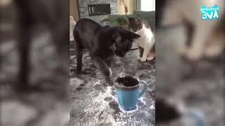 Приколы с Котами   Смешные коты и кошки 2018   ТЕСТ НА ПСИХИКУ, ПРОБУЙ НЕ СМЕЯТЬ 1