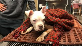 """""""Miracle"""" dog survives being thrown into Georgia apartment dumpster on Christmas"""
