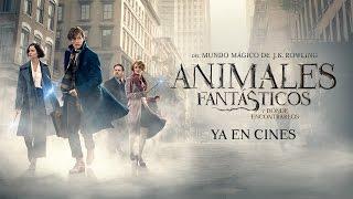 Trailer of Animales fantásticos y dónde encontrarlos (2016)