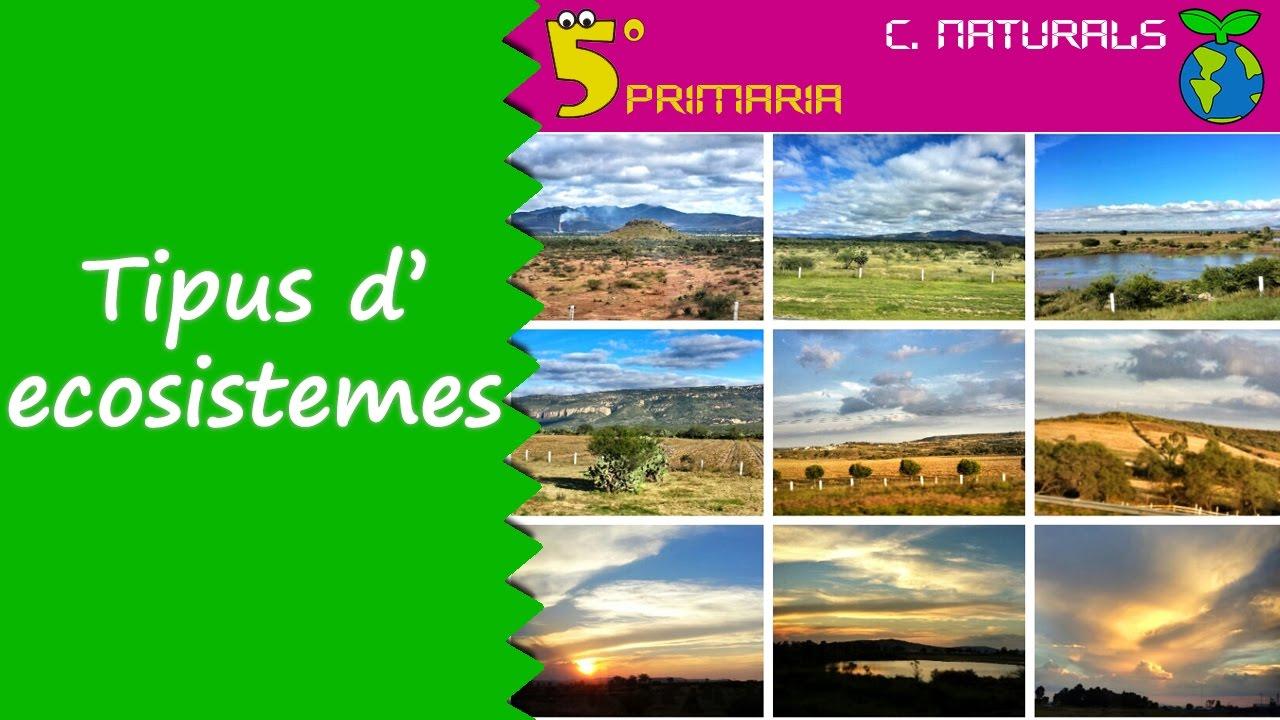 Tipus d'ecosistemes. Naturals, 5é Primària. Tema 6