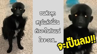 เห็นสิ่งนี้แล้วนอนแทบไม่หลับ อย่าเล่นฟิลเตอร์กับหมา กำลังดังในTiktok... #รวมคลิปฮาพากย์ไทย