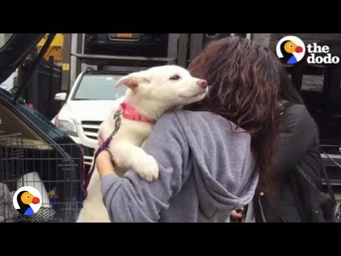 Dogs Rescued From Meat Trade Feel Freedom For the First Time | The Dodo