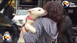 Download Youtube: Dogs Rescued From Meat Trade Feel Freedom For the First Time | The Dodo