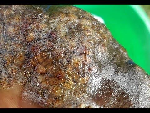 Küzdelem a bőr parazitái ellen