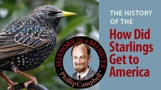 How Did Starlings Get to America: History in a Minute (Episode 31)