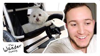 NEW BABY STROLLER!! 🏃 Best Jogging + Running Stroller | The Wander Family