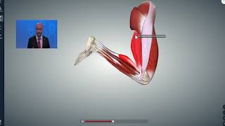 The Quad and Hamstring Muscles