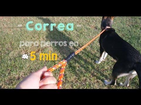 Correa para perro en 5 minutos