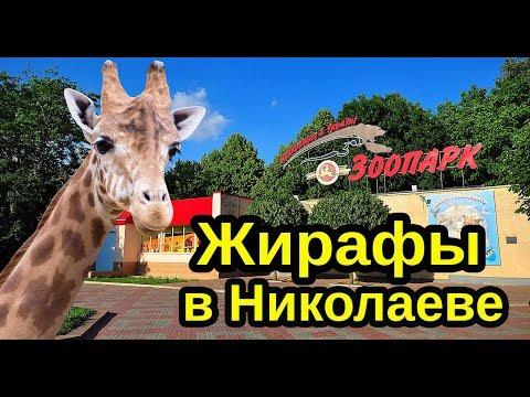 Жираф в Николаеве, в Николаевский зоопарк привезли жирафов. Зоопарк Николаев 2019