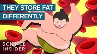 How Sumo Wrestlers Stay Healthy On 7,000 Calories A Day
