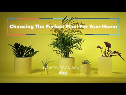 Find The Best Spots For Houseplants In Your Home With The 'Shadow Trick'