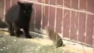 Смотреть онлайн Бесшабашная крыса нападает на котов