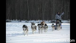 Dog Sledding in Mongolian winter new tourism product