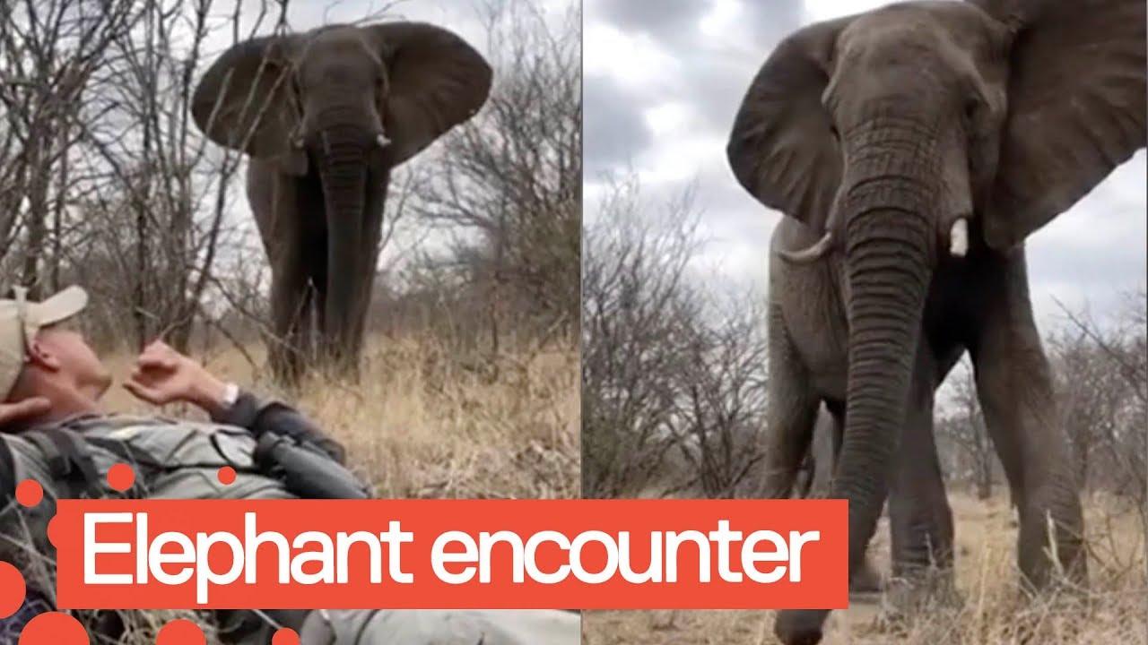 Невероятно близкая встреча со слоном
