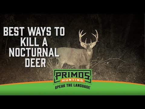 How to Hunt a Mostly Nocturnal Deer video thumbnail