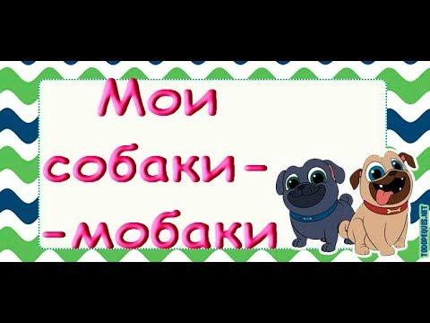 Мои ТРИ СОБАКИ:Тузик,Ластя и Рада :))