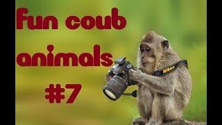 FUN coub animals #7/ видеоприколы/ coub2018/ животные/ смешныеживотные/ приколы2018