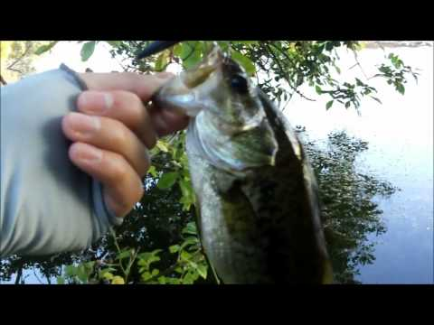 Southwest Washington State Summer Bass Fishing HD
