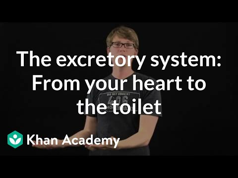 The excretory system: From your heart to the toilet (video