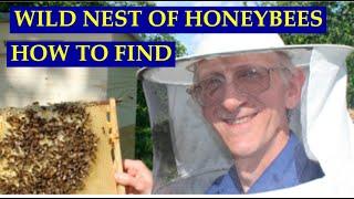 Дикое Гнездо Медоносных Пчел Нашли В Лесу! Wild Honeybee Nest in Forest near Kiev, Ukraine