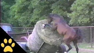 Смотреть онлайн Нарезка приколов с лошадьми