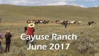 Cayuse Ranch