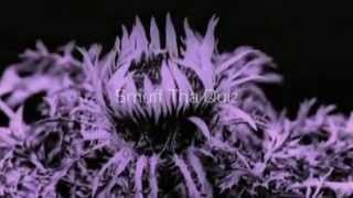 FilterHQ Radio - Veridical Dreams (Promo)