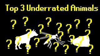 Top 3 Underrated Animals (Feat. Vsauce3)