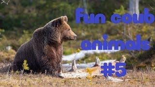 FUN coub animals #5 / смешные ролики с животными / Coub 2018