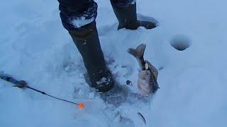 Рыбалка на Волге зимой на тюльку в Ильинке.
