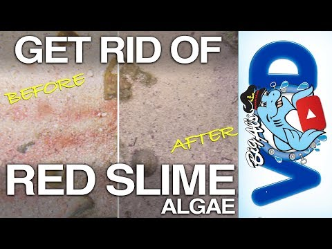 How to Get Rid of Red Slime Algae (Video)