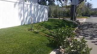 How to Support Trees so They Won't Fall Over