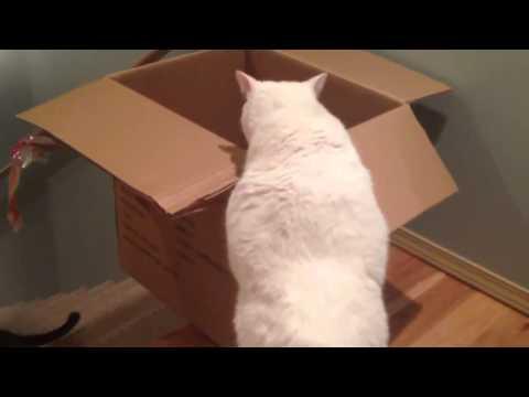 Đây là cách mèo nhà em xuống cầu thang